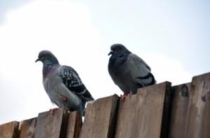 Charlotte Bird Deterrent